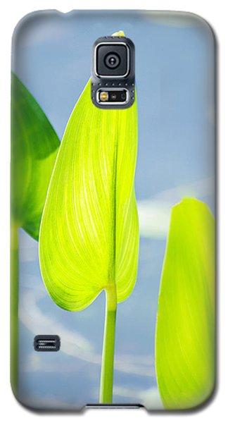 Calm Greens Galaxy S5 Case