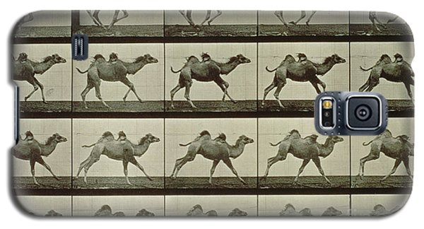 Desert Galaxy S5 Case - Camel by Eadweard Muybridge