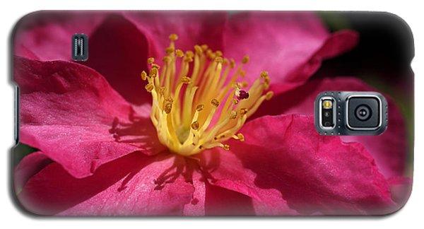 Camellia Sasanqua Galaxy S5 Case