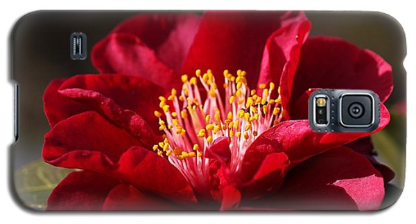 Camellia's In Style Galaxy S5 Case