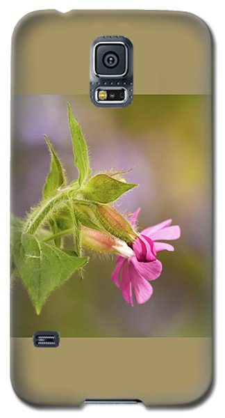 Campion And Blue Galaxy S5 Case