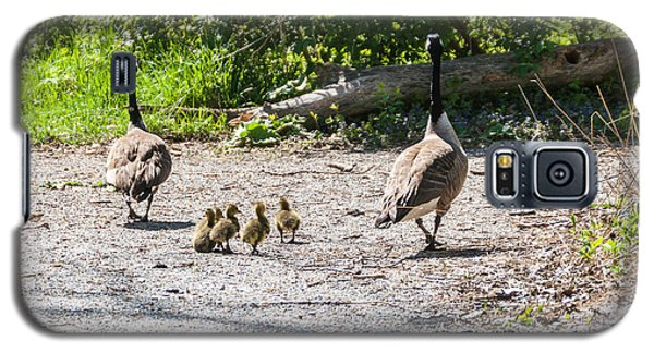 Canada Geese Family Walk Galaxy S5 Case