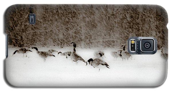 Canada Geese Feeding In Winter Galaxy S5 Case