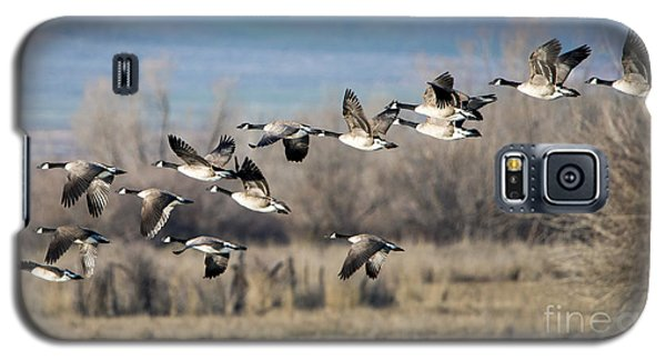 Canada  Geese Flock Galaxy S5 Case
