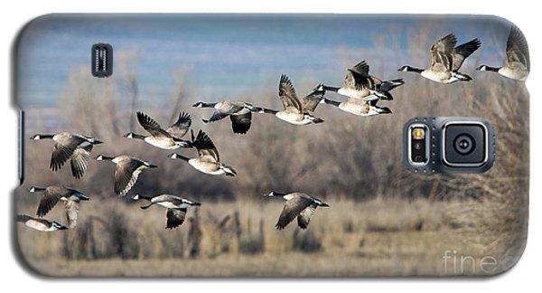 Canada  Geese Flock Galaxy S5 Case by Mike Dawson