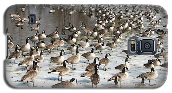 Canada Geese Galaxy S5 Case