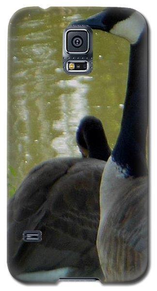 Canada Goose Edge Of Pond Galaxy S5 Case