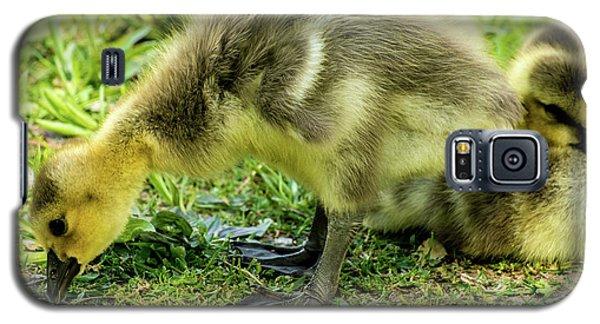 Canada Goose Gosling Galaxy S5 Case by Gary Whitton