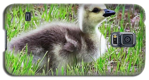 Canada Goose Gosling Galaxy S5 Case