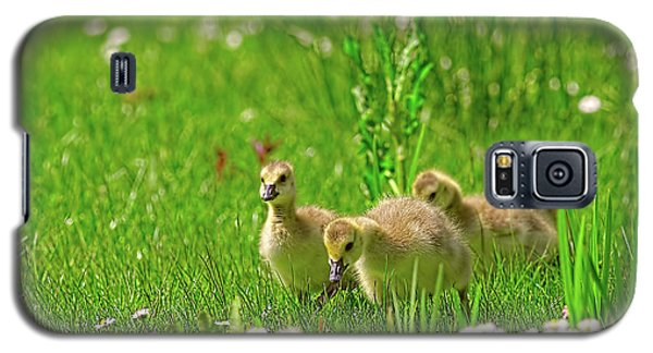 Galaxy S5 Case featuring the photograph Canada Goose Goslings In A Field Of Daisies by Sharon Talson