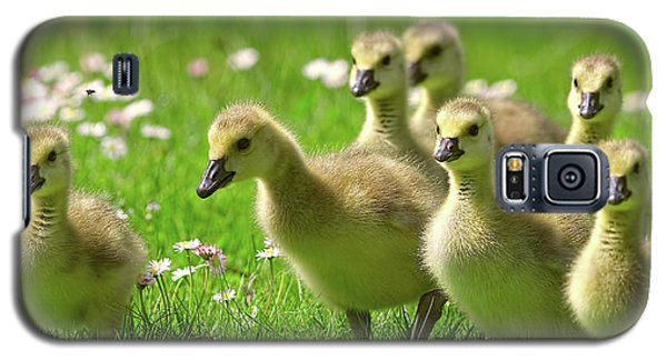 Galaxy S5 Case featuring the photograph Canada Goose Goslings by Sharon Talson