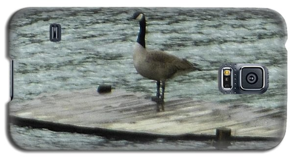Galaxy S5 Case featuring the photograph Canada Goose Lake Dock by Rockin Docks Deluxephotos