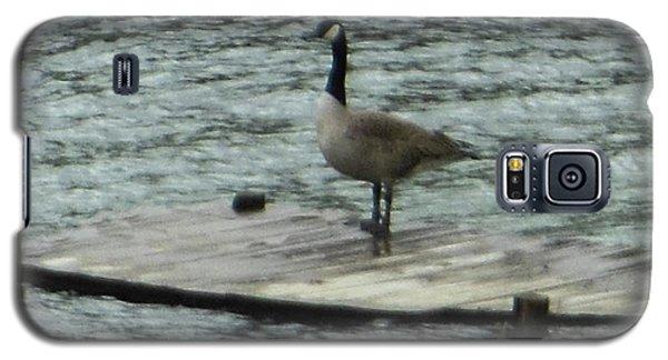 Canada Goose Lake Dock Galaxy S5 Case