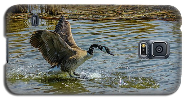 Canada Goose Takes Flight, Frank Lake, Alberta, Canada Galaxy S5 Case