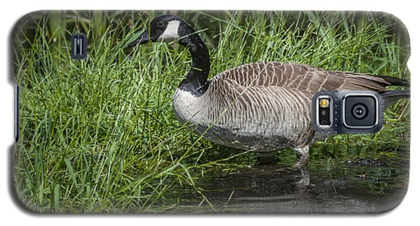 Galaxy S5 Case featuring the photograph Canada Goose by Tyson and Kathy Smith