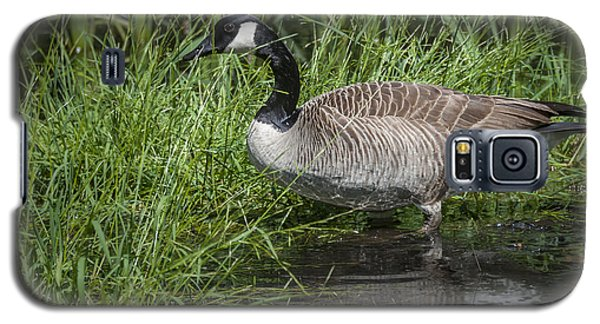 Canada Goose Galaxy S5 Case by Tyson and Kathy Smith