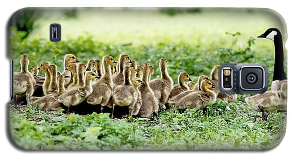 Galaxy S5 Case featuring the photograph Canada Gosling Daycare by Rona Black