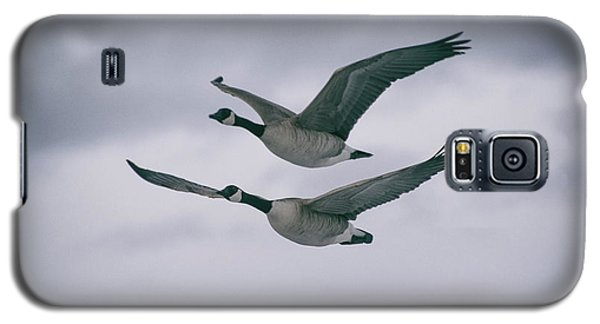 Canadian Geese In Flight Galaxy S5 Case