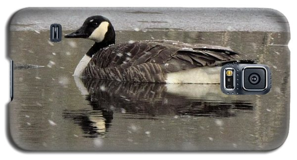 Canadian Goose In Michigan Galaxy S5 Case