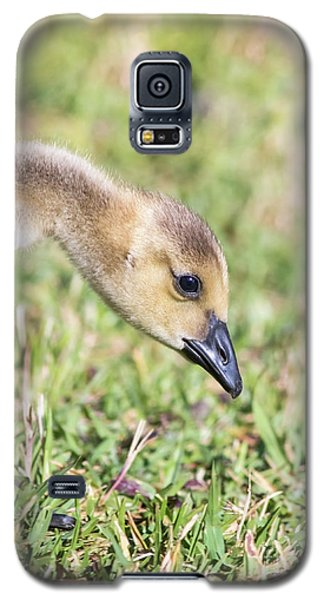 Canadian Gosling Galaxy S5 Case by Robert Frederick