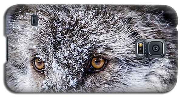 Canadian Grey Wolf In Portrait, British Columbia, Canada Galaxy S5 Case