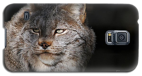 Canadian Lynx  20130107_57 Galaxy S5 Case