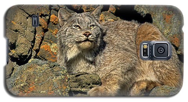 Galaxy S5 Case featuring the photograph Canadian Lynx On Lichen-covered Cliff Endangered Species by Dave Welling