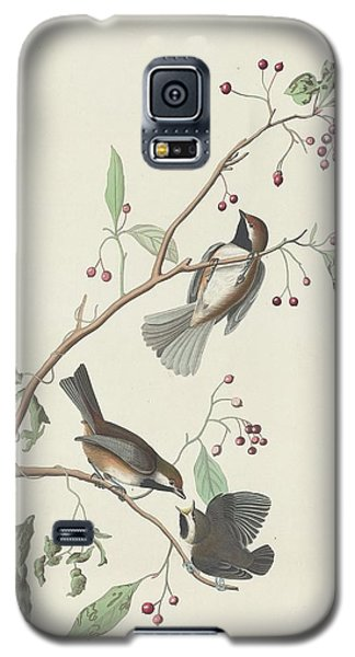 Canadian Titmouse Galaxy S5 Case