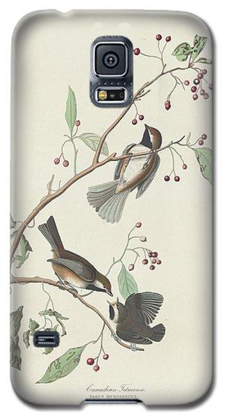 Canadian Titmouse Galaxy S5 Case by Anton Oreshkin