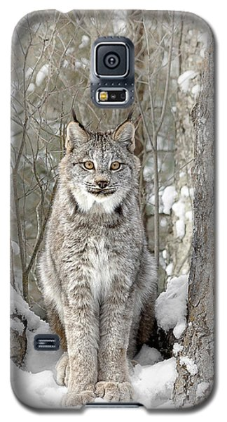 Canadian Wilderness Lynx Galaxy S5 Case