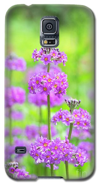 Galaxy S5 Case featuring the photograph Candelabra Primula by Tim Gainey