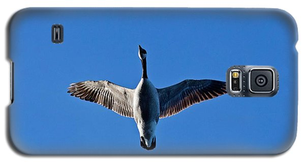 Candian Goose In Flight 1648 Galaxy S5 Case by Michael Peychich