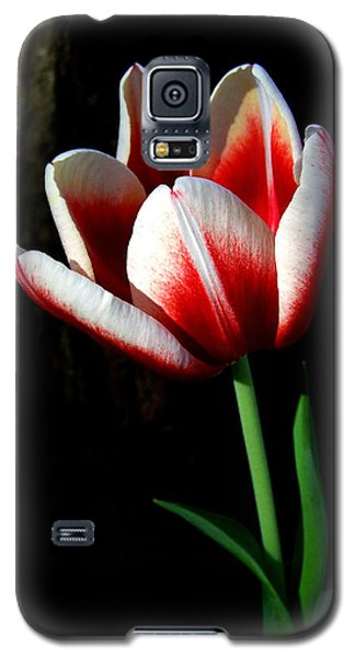 Candy Cane Tulip Galaxy S5 Case