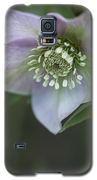 Galaxy S5 Case featuring the photograph Candy Love by Jacqui Boonstra