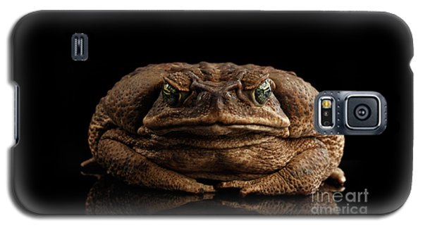 Cane Toad - Bufo Marinus, Giant Neotropical Or Marine Toad Isolated On Black Background, Front View Galaxy S5 Case