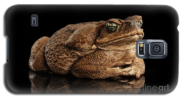Cane Toad - Bufo Marinus, Giant Neotropical Or Marine Toad Isolated On Black Background Galaxy S5 Case