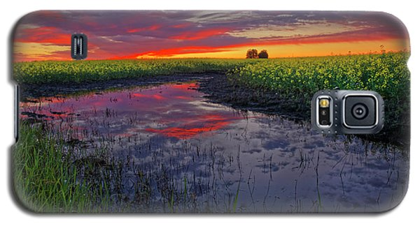 Canola At Dawn Galaxy S5 Case