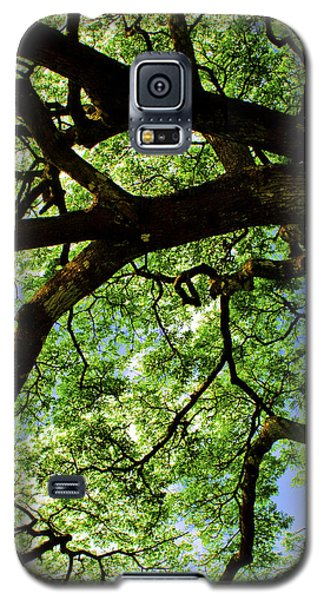 Canopy 1 Galaxy S5 Case by Rob Tullis