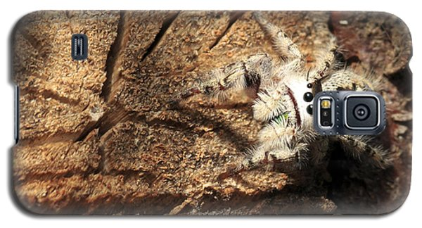 Canopy Jumping Spider Galaxy S5 Case