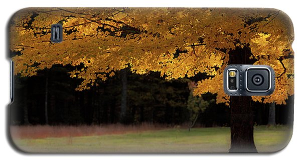 Canopy Of Autumn Gold Galaxy S5 Case