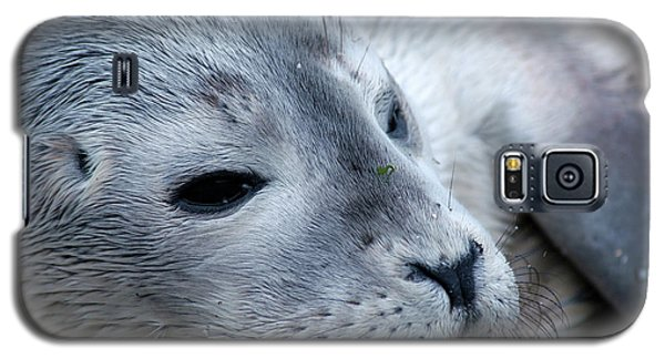 Galaxy S5 Case featuring the photograph Cape Ann Seal by Mike Martin