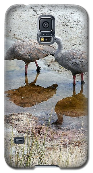 Cape Baron Geese On Maria Island 2 Galaxy S5 Case