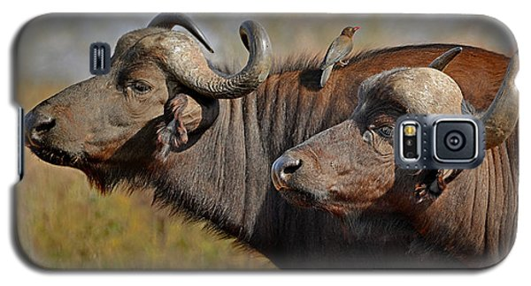 Cape Buffalo And Their Housekeeper Galaxy S5 Case
