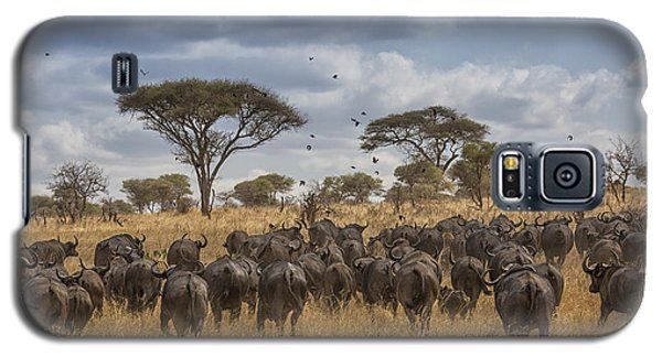 Cape Buffalo Herd Galaxy S5 Case