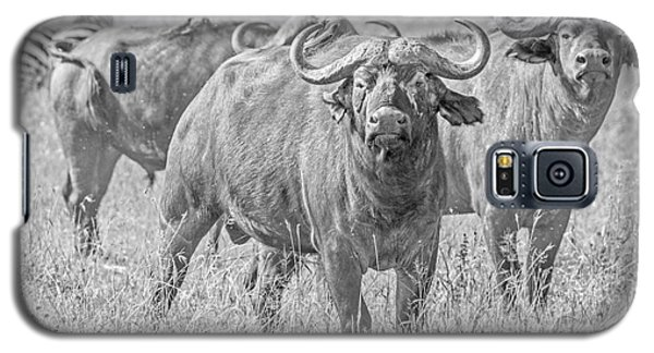 Cape Buffalos In Serengeti Galaxy S5 Case by Pravine Chester