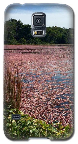Cape Cod Cranberry Bog Galaxy S5 Case by Beth Saffer