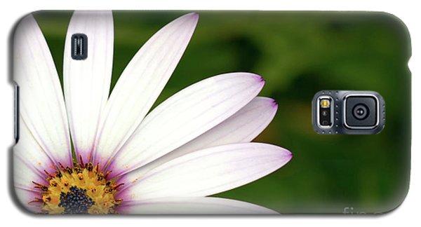 Cape Daisy Galaxy S5 Case by Baggieoldboy