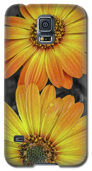 Cape Daisy's - Orange Galaxy S5 Case