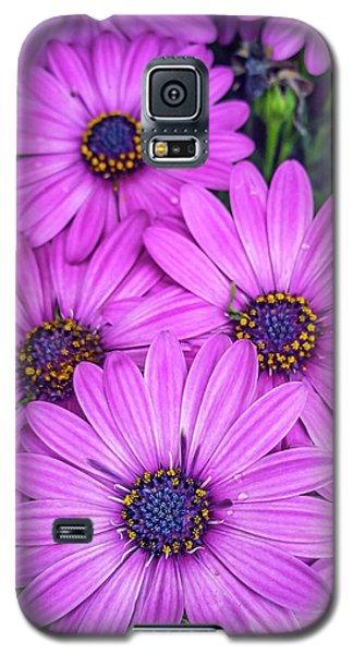 Cape Daisys - Purple Galaxy S5 Case