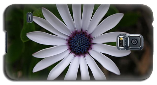 Cape Daisy Galaxy S5 Case